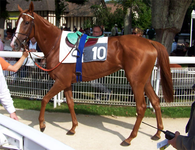 deauville_clairefontaine_s